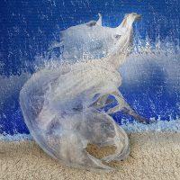 Sediments - volo di plastiche  / © Franco Donaggio, all rights reserved