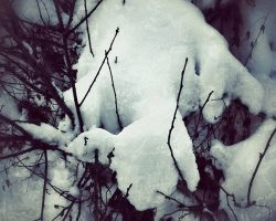 The wood of thought - creatura di neve  /  ©Franco Donaggio, all rights reserved