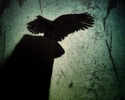 The wood of thought - il guardiano del sentiero  /  ©Franco Donaggio, all rights reserved