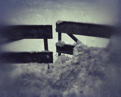 The wood of thought - inizio del cammino  /  ©Franco Donaggio, all rights reserved