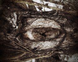 The wood of thought - l'oracolo del sentiero  /  ©Franco Donaggio, all rights reserved