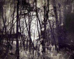 The wood of thought - nel mezzo del cammin di nostra vita  /  ©Franco Donaggio, all rights reserved