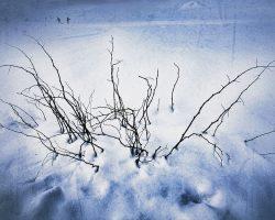 The wood of thought - prima del risveglio  /  ©Franco Donaggio, all rights reserved